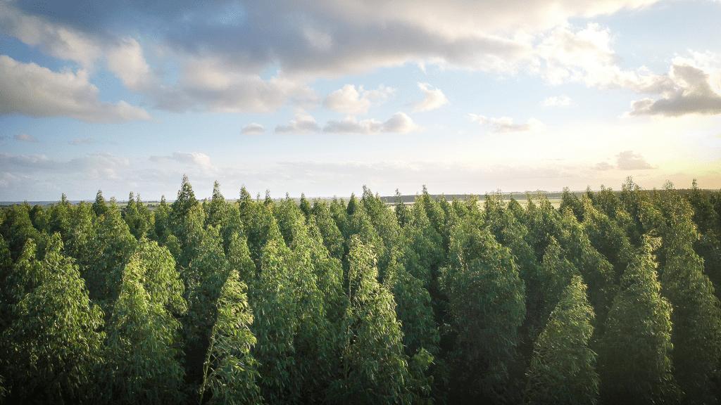 rising-above-trees-credit-thiago-japyassu